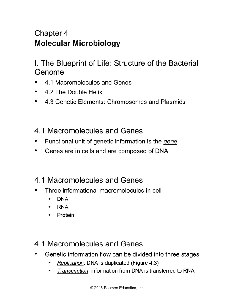 Chapter 4 i the blueprint of life structure of the bacterial genome malvernweather Images