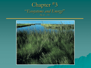 Chapter 3 Ecosystems and Energy #