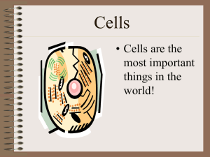 Cells • Cells are the most important things in the