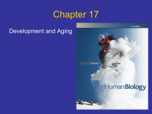 Chapter 17 Development and Aging