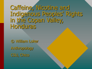 Caffeine, Nicotine and Indigenous Peoples' Rights in the Copan Valley, Honduras
