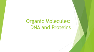 Organic Molecules: DNA and Proteins