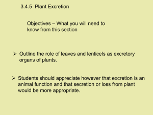 3.4.5  Plant Excretion – What you will need to Objectives