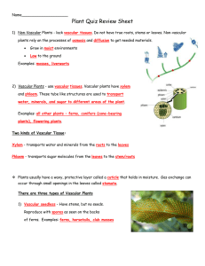 Plant Quiz Review Sheet