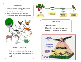 Food Chains  Represents how energy flows from one organism to the next