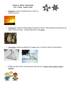 Animals in Winter Study Guide Test: Friday, January 22nd