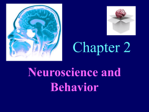 Chapter 2 Neuroscience and Behavior