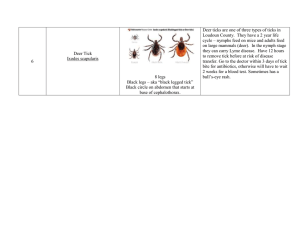 Deer ticks are one of three types of ticks in
