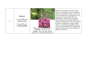Milkweed is considered a noxious (toxic)