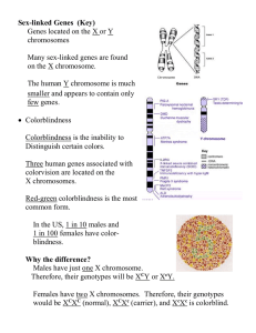 Sex-linked Genes  (Key) Genes located on the X or Y chromosomes
