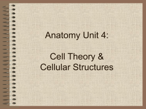 Anatomy Unit 4: Cell Theory & Cellular Structures