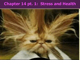 Chapter 14 pt. 1:  Stress and Health