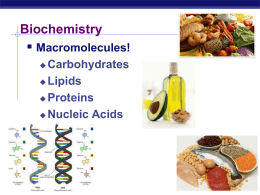  Biochemistry Macromolecules! Carbohydrates