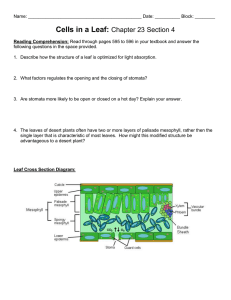 Cells in a Leaf:  Chapter 23 Section 4