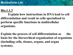 Bio.1.1.3 Explain how instructions in DNA lead to cell