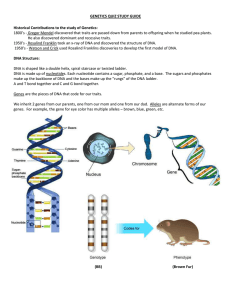 GENETICS QUIZ STUDY GUIDE Historical Contributions to the study of Genetics: