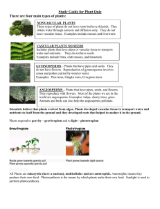 Study Guide for Plant Quiz