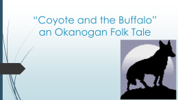"""Coyote and the Buffalo"" an Okanogan Folk Tale"