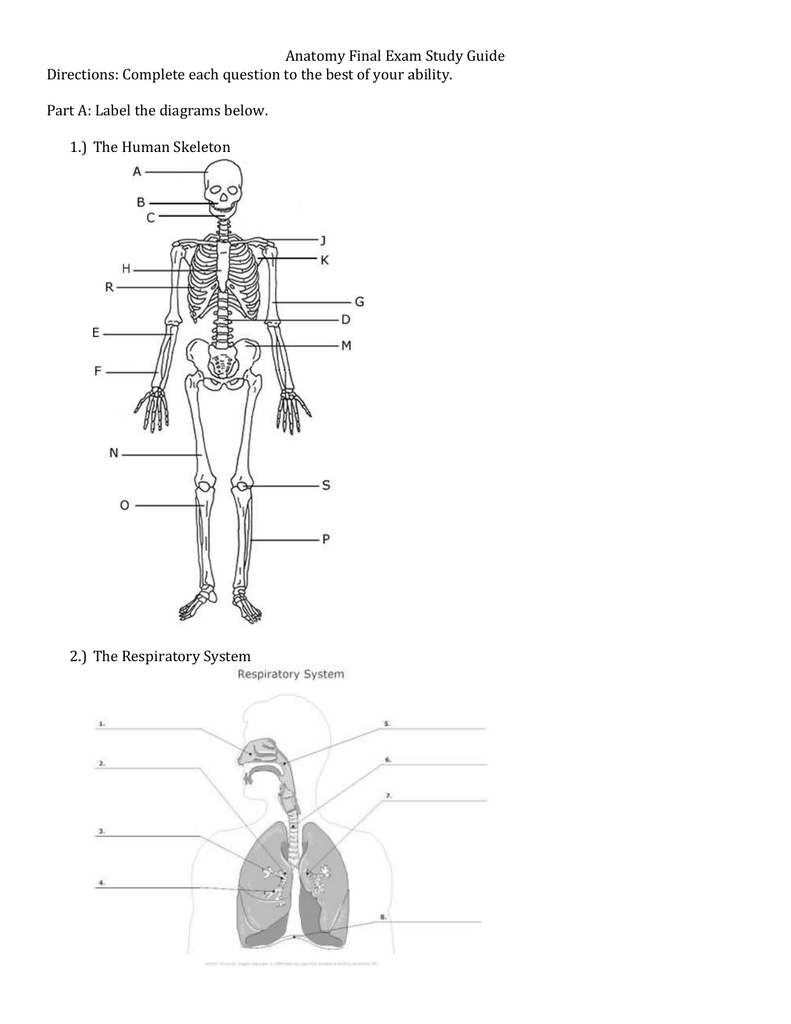 Skeleton Study Guide Label Lunar Meteorite Caravan Wiring Diagram Array Anatomy Final Exam Part A The Diagrams Below Rh Studylib