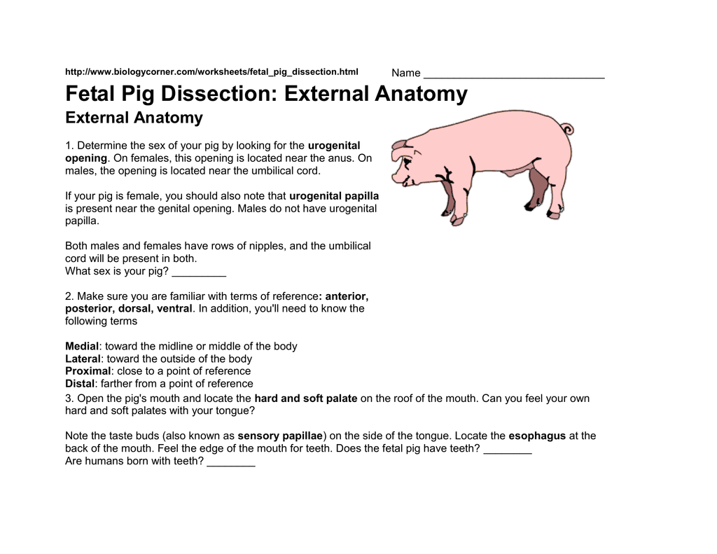 Fetal Pig Dissection: External Anatomy External Anatomy