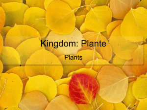 Kingdom: Plante Plants