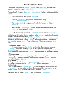 Study Guide & Notes - Fungi  The Kingdom Fungi includes _