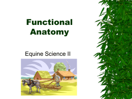 Functional Anatomy Equine Science II