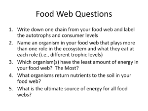 Food Web Questions