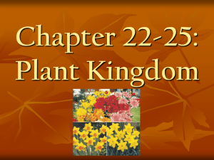 Chapter 22-25: Plant Kingdom