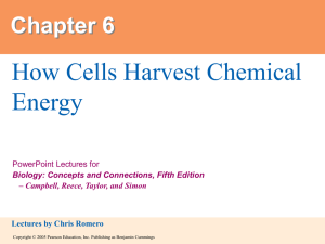 How Cells Harvest Chemical Energy Chapter 6 PowerPoint Lectures for