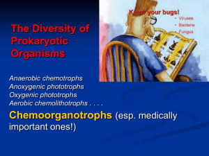 The Diversity of Prokaryotic Organisms Chemoorganotrophs