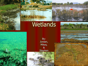 Wetlands By: Jordan, Mikey,