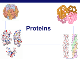 Proteins AP Biology 2005-2006