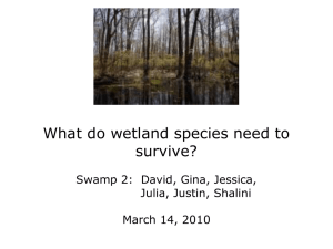 What do wetland species need to survive? Julia, Justin, Shalini