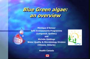 Blue Green algae: an overview