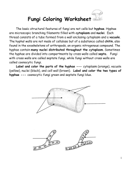 Fungi Coloring Worksheet