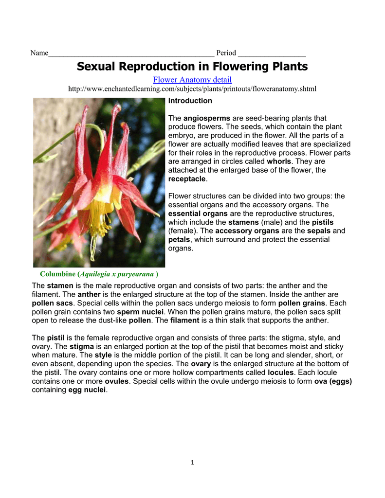 Sexual Reproduction In Flowering Plants Flower Anatomy Detail