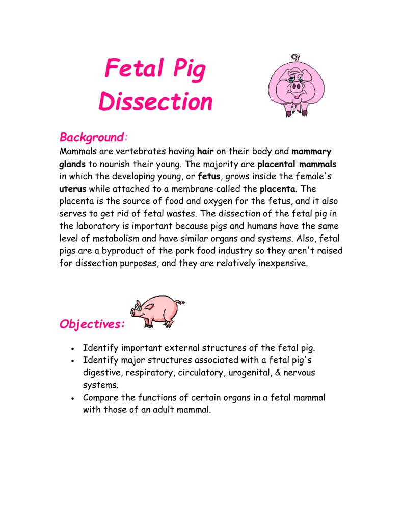 Fetal Pig Dissection Background
