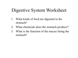 Digestive System Worksheet