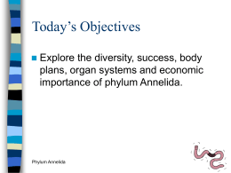 Today's Objectives Explore the diversity, success, body plans, organ systems and economic