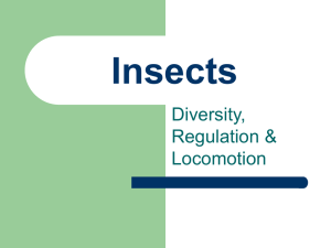 Insects Diversity, Regulation & Locomotion
