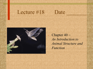 Lecture #18 Date _______ Chapter 40 ~ An Introduction to