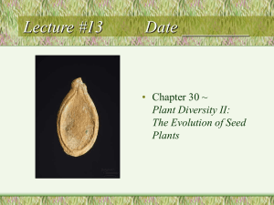 Lecture #13         ... • Chapter 30 ~ Plant Diversity II: