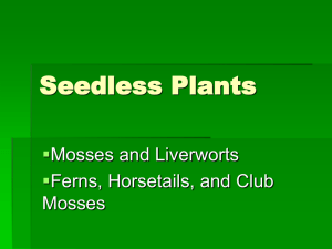 Seedless Plants  Mosses and Liverworts Ferns, Horsetails, and Club