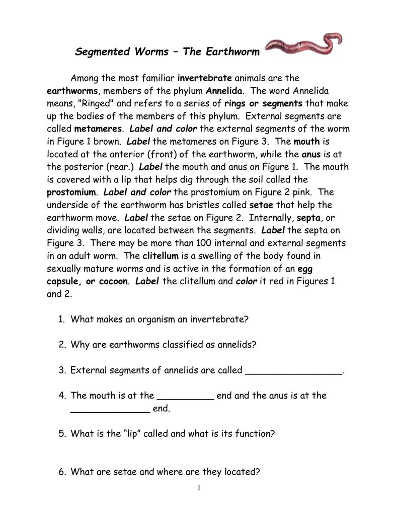 Worksheet Earthworm Worksheet Answers Worksheet Fun Worksheet
