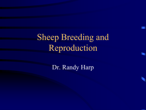 Sheep Breeding and Reproduction Dr. Randy Harp