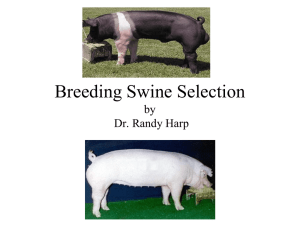 Breeding Swine Selection by Dr. Randy Harp