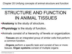 STRUCTURE AND FUNCTION IN ANIMAL TISSUES  Anatomy