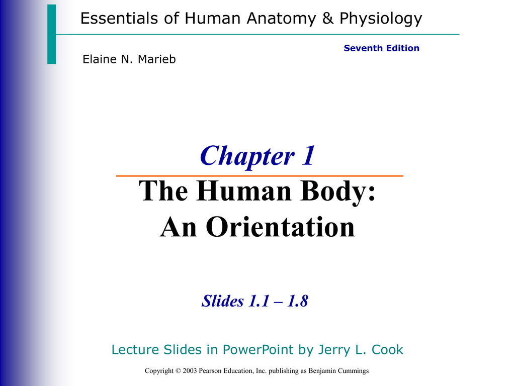 The Human Body An Orientation Chapter 1 Slides 11 18