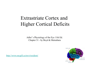 Extrastriate Cortex and Higher Cortical Deficits